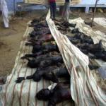 Muslims were burnt to death